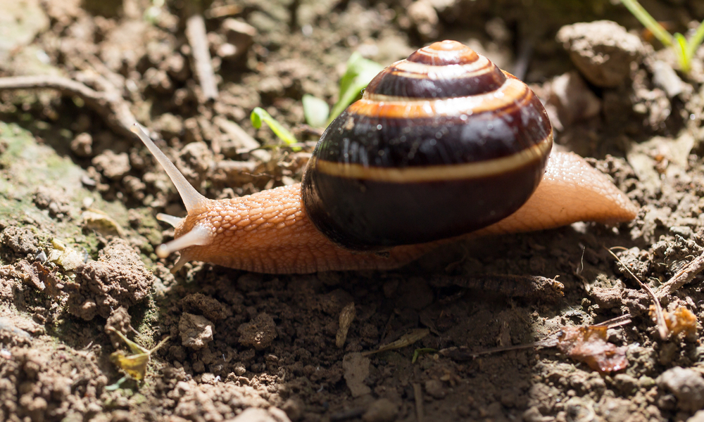 Consider the Snail: Teaching Online and Learning to Breathe